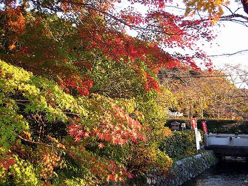 夕日に照らされる紅葉