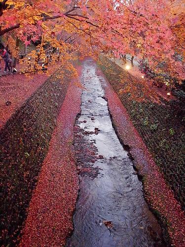 紙屋川と御土居