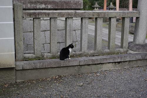 御所のネコ