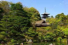 御室仁和寺ほぼ葉桜