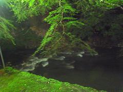 高雄の川床とホタル