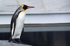 ペンギン(補正後)
